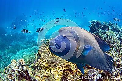 Poissons chez la Grande barrière de corail
