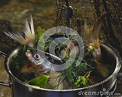 poissons d 39 eau douce photos stock image 7675423. Black Bedroom Furniture Sets. Home Design Ideas