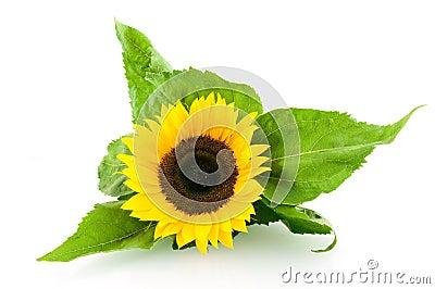 Znalezione obrazy dla zapytania słoneczniki cliparty