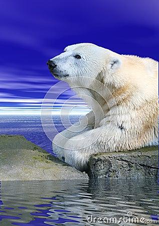 Free Polar Bear Stock Image - 548251