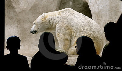 Polar Bear with audience.