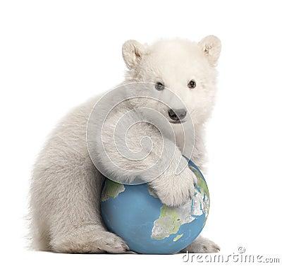 Free Polar Bear Cub, Ursus Maritimus, 3 Months Old Royalty Free Stock Photos - 25301198