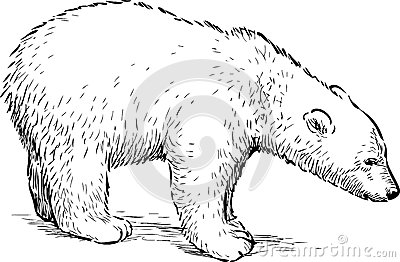 Stock Illustration Polar Bear Cub Vector Drawing Small White Image54144029 moreover Stock Photos Monocle Top Hat Sketch Image22382103 besides Body Diagram Professional Massage Chart Front Back Left 210696 furthermore Royalty Free Stock Photography Generic Saloon Car Diagram Image1159987 likewise Abs Drawing Reference Guide Draw The Perfect Abs. on top web designers