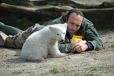 Polar bear Knut Editorial Stock Image