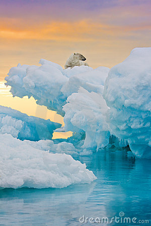 Free Polar Bear On Frozen Outcrop Stock Photo - 12503770