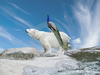 Polar bear and peacock