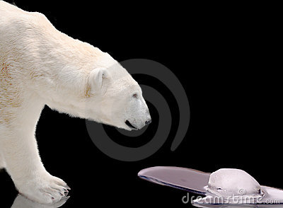 Polar bear watching melting ice