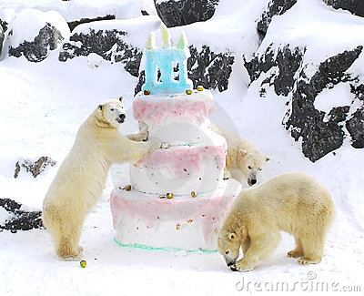 Polar bears giant birthday cake