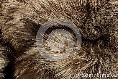 Polar Fox fur. Useful as texture