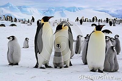 Polar scene from Antarctic