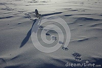 Polar Ural Animals