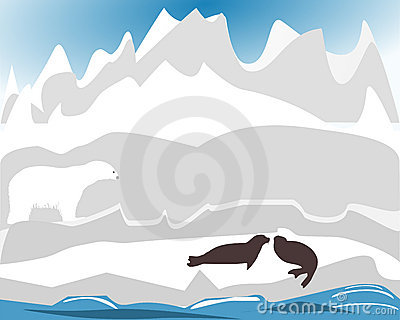 Polarbear hunting for seal