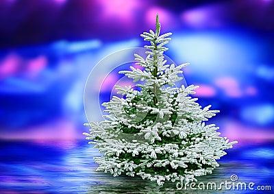 Polarised light and Christmas tree