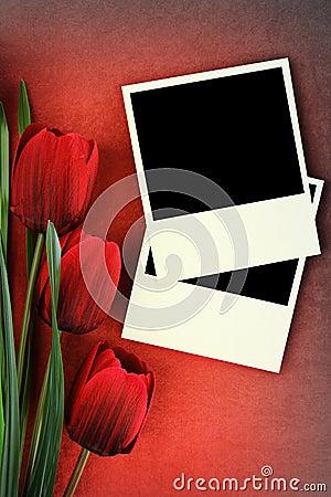 Polaroid frame and tulips