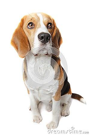 A polícia droga o cão do tubo aspirador