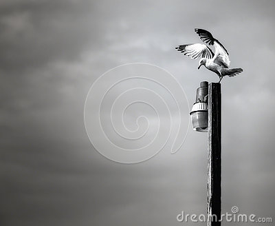 Pole Dancer (Seagull on Light Pole)
