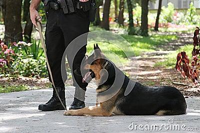 Police Dog 1