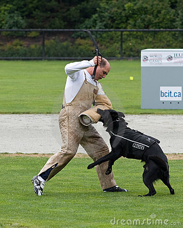 Police dog competition Editorial Photo