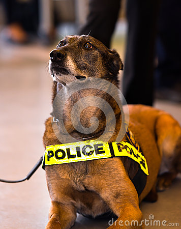 Police dog guard safe the public peace