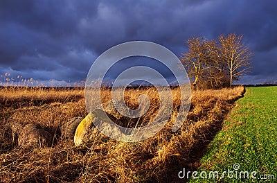 Polish rural landscape.