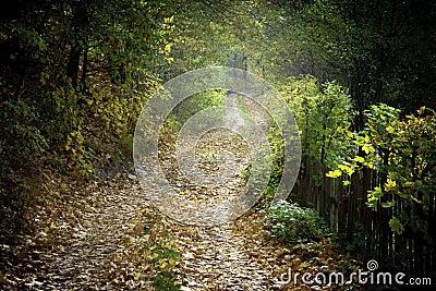 Polish rural scenery
