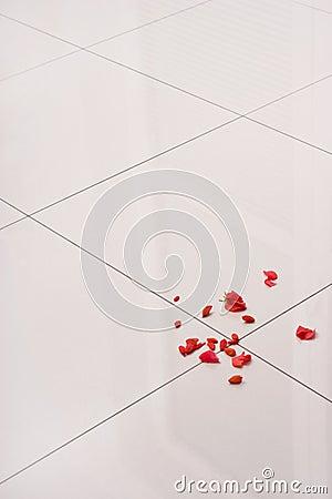 Polished floor gress