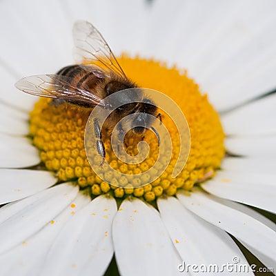 Pollen Binge