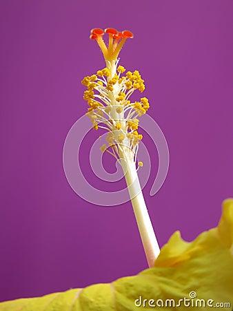 Pollen Details
