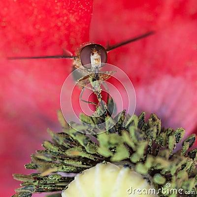 Pollen Extraction