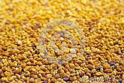 Pollen Grain Selective Focus