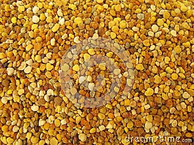 Pollen granules full frame