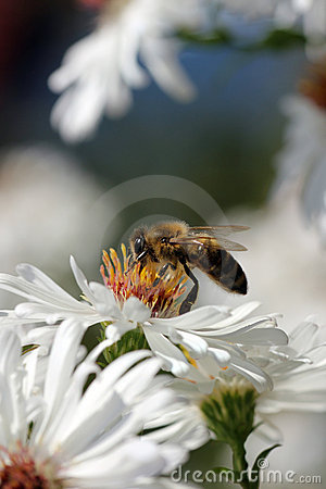 Pollination collect,