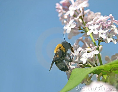 The pollinator and the pollinated