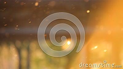 Polline sul tramonto della molla video d archivio