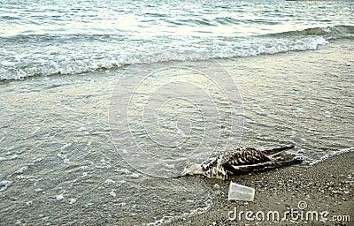 Polluted Black Sea coast in Romania