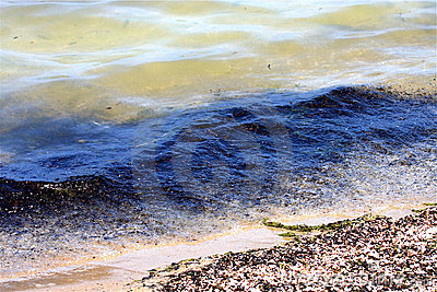 Polluted Water and Beach