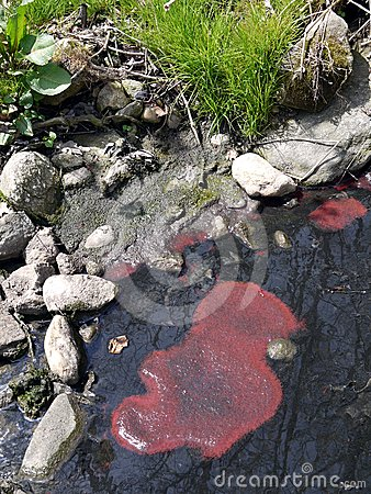 Polluted water: red algae