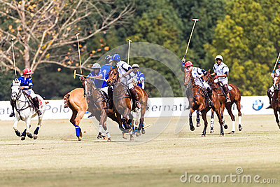 Polo Players Ponies Blue White  Editorial Stock Image