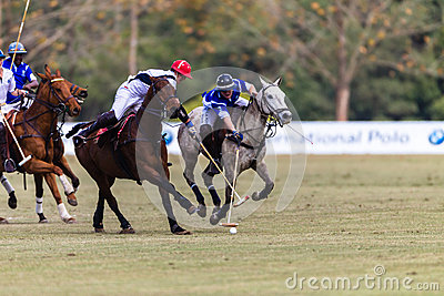 Polo Players Ponies Challenge Possesion Editorial Stock Image