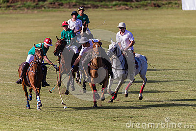 Polo Players Pony Action Sticksl Editorial Stock Photo