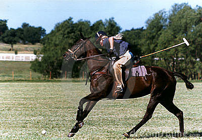 Polo Practice