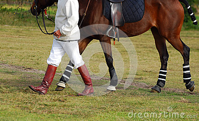Polocrosse player with horse