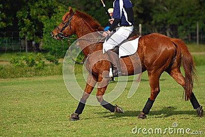 Rider horseback on polocrosse pony
