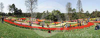 Poly shixiang lake tulip tourism festival Editorial Stock Image