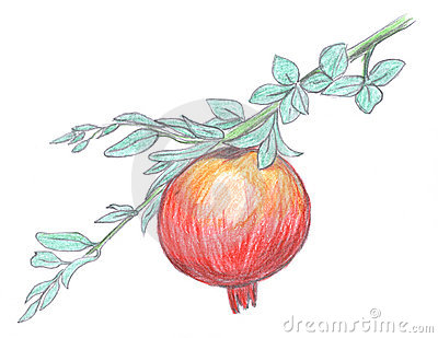 Pomegranate fruit sketch, garnet
