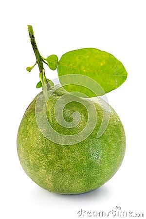 Pomelo, Pummelo, Pommelo(Citrus maxima or Citrus grandis), on white