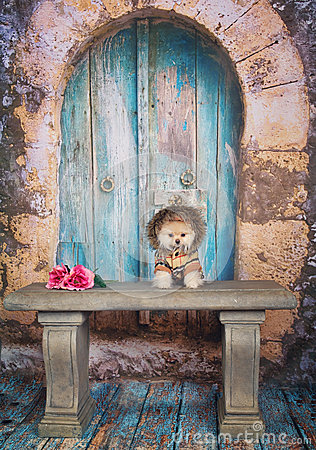 Free Pomeranian Puppy Stock Photo - 51127380