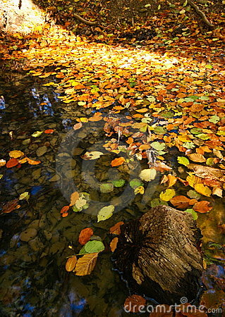 Pond in autumn