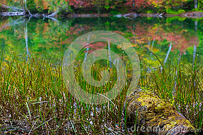 Pond in beech forest.
