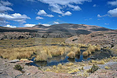 Pond in Bolivia,Bolivia